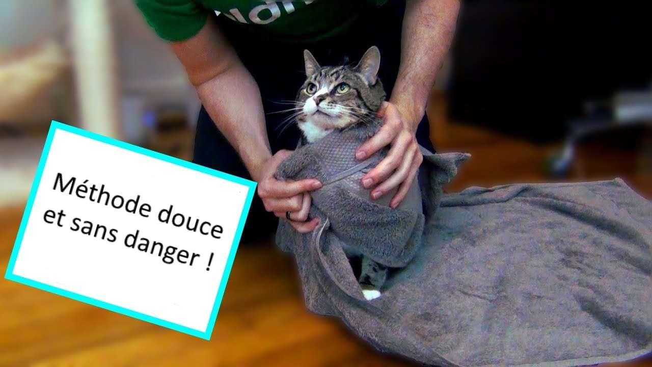 Donner un médicament au chat