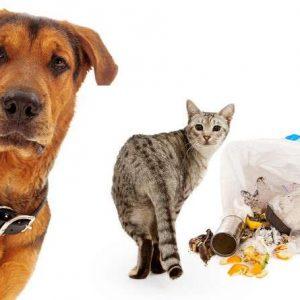 éloigner les chiens et chats de vos poubelles