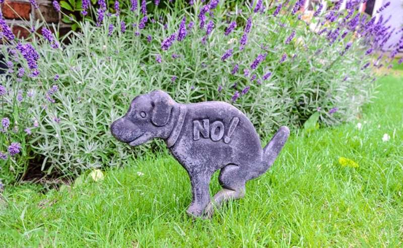 Répulsif naturel urine chiens et chats