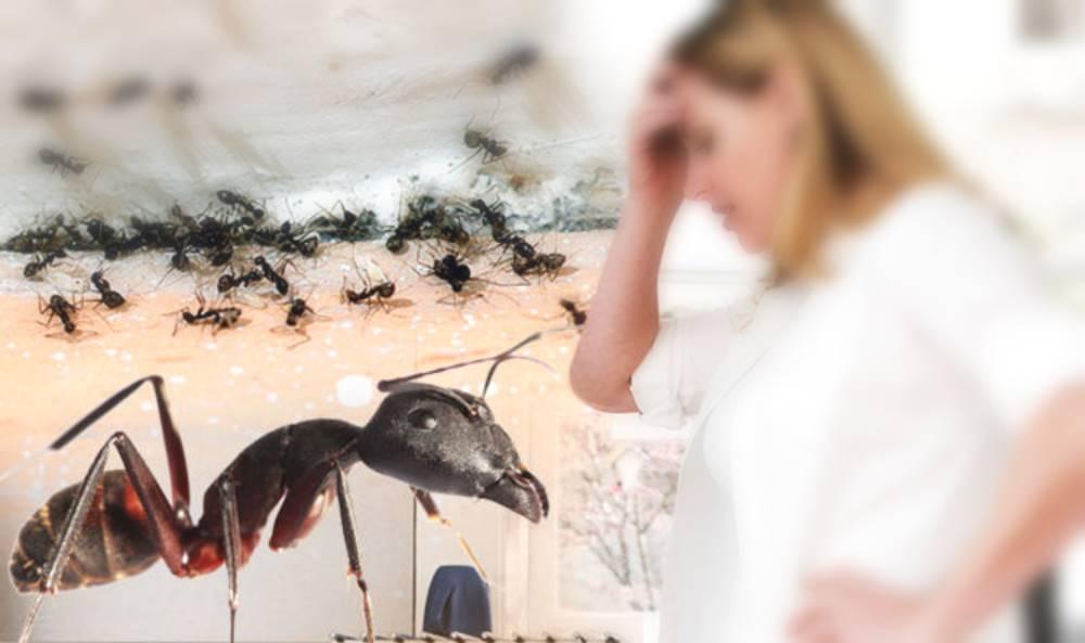 comment se debarrasser des fourmis dans la maison naturellement