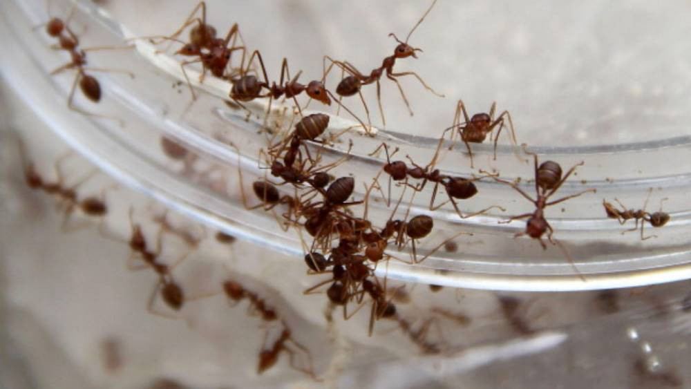 se debarrasser fourmis placards
